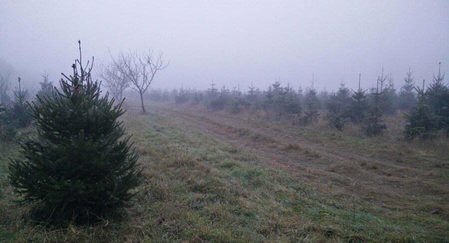 C'est le matin, il faut aller chercher à montmirail le sapin du forestier dans la brume