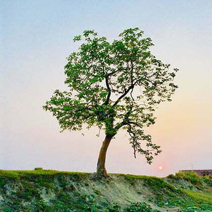 arbre nature